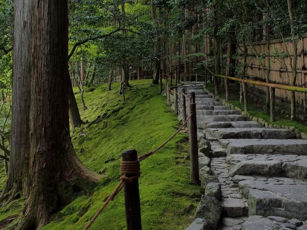 A Quiet Moss Garden