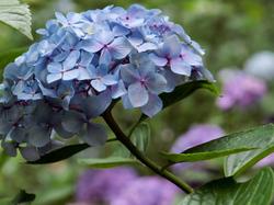 Flowers of Rainy Season - 2 -