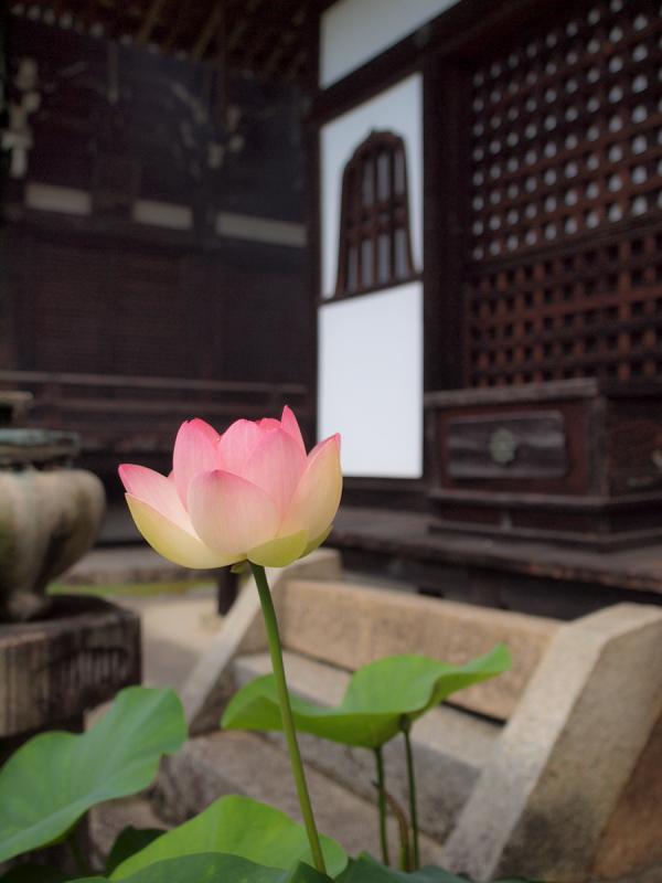 Flowers of Rainy Season - 7 -