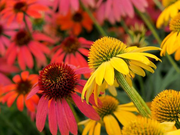 Flowers of Rainy Season - 8 -