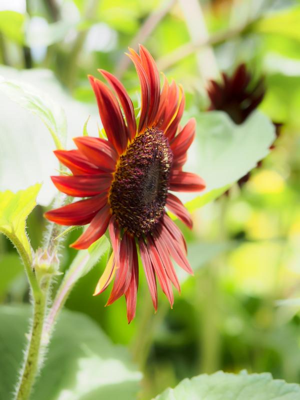 Flowers of Rainy Season - 9 -