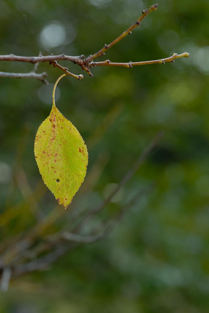Autumn Colors - 32 -