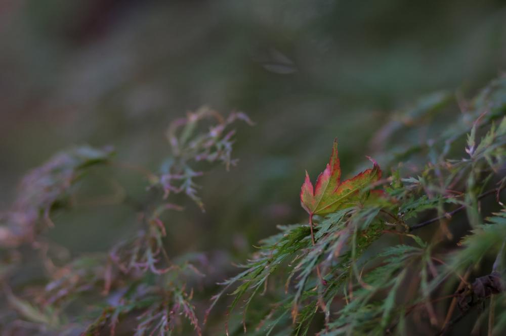 Autumn Colors - 39 -