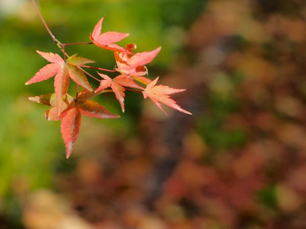 Autumn Colors - 43 -