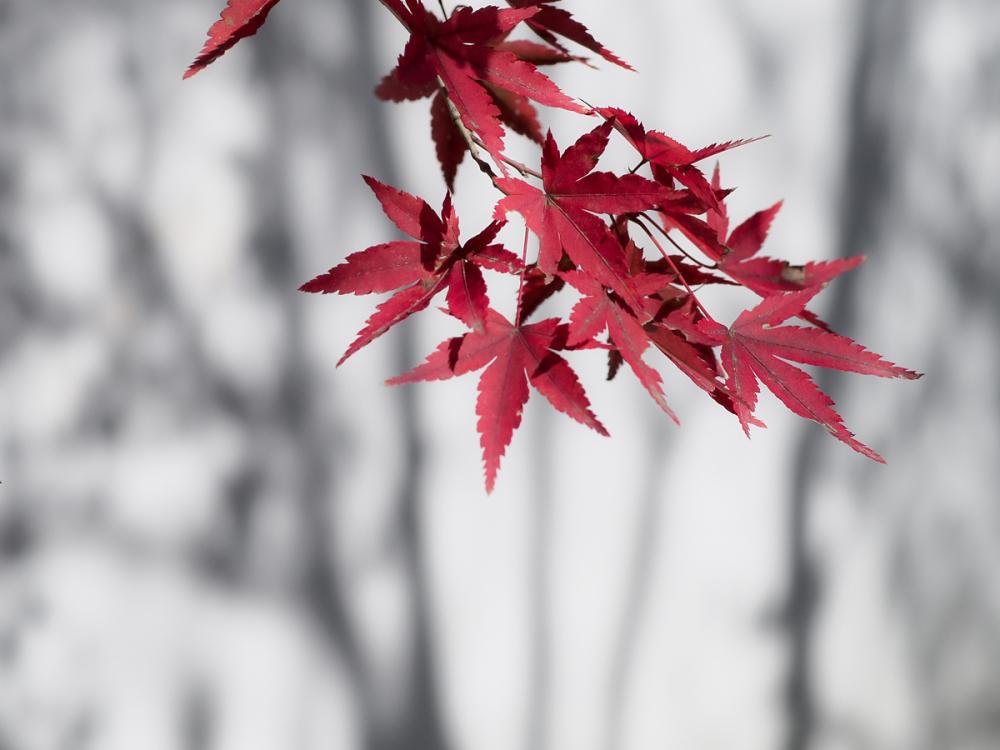 Autumn Colors - 44 -