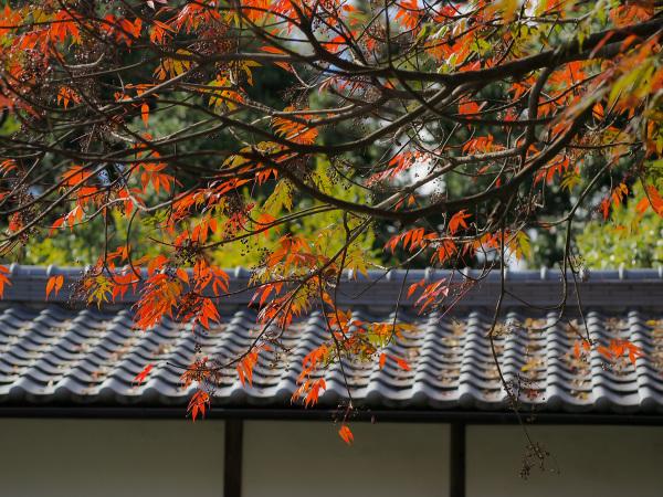 Autumn Colors - 47 -