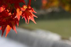 Autumn Colors - 48 -