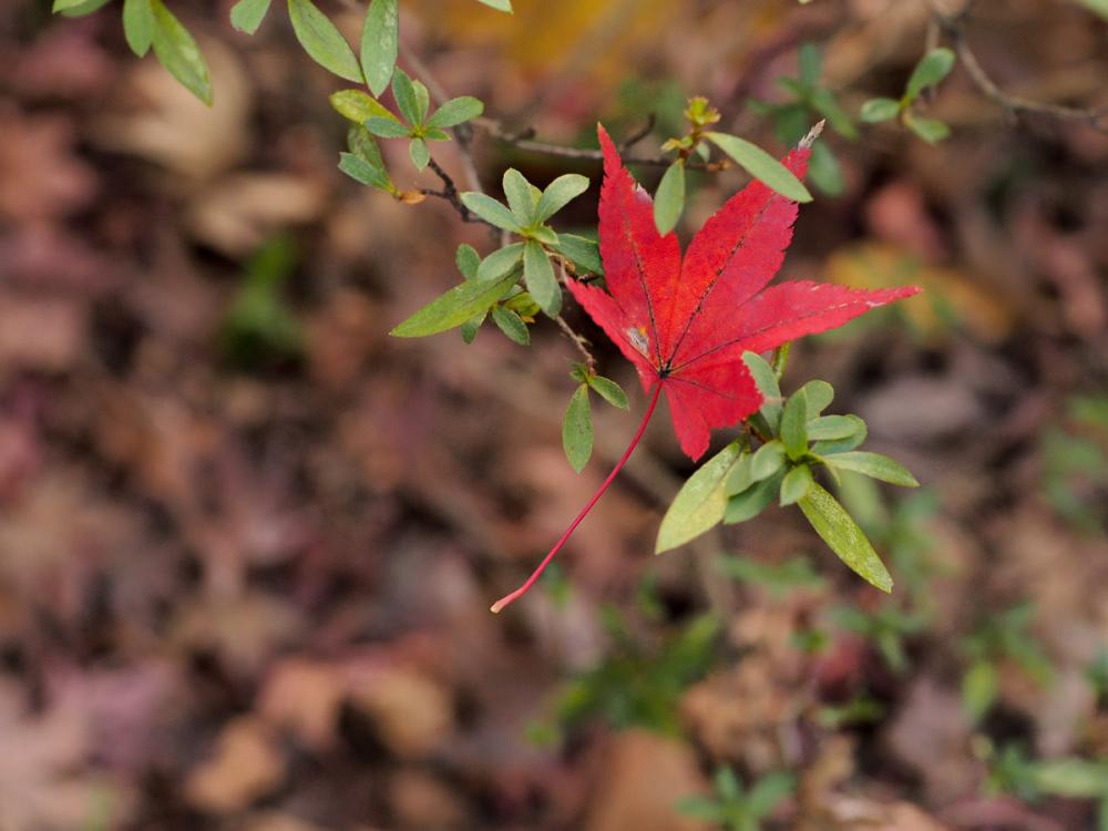 Autumn Colors - 52 -