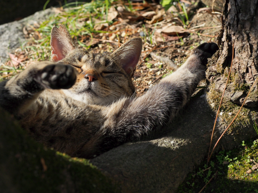 Lazy Afternoon - 406 -