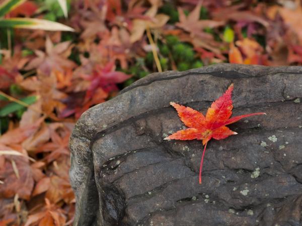 Autumn Colors - 55 -