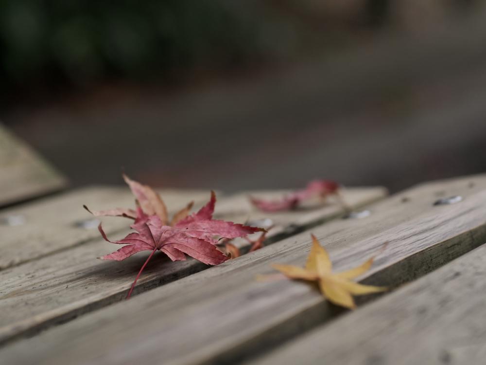 Autumn Colors - 57 -
