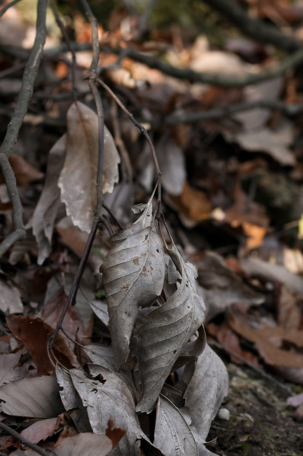 Winter Leaves - 1 -