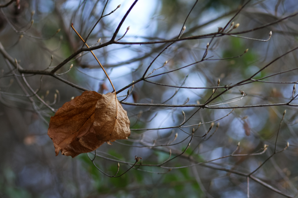 Winter Leaves - 2 -