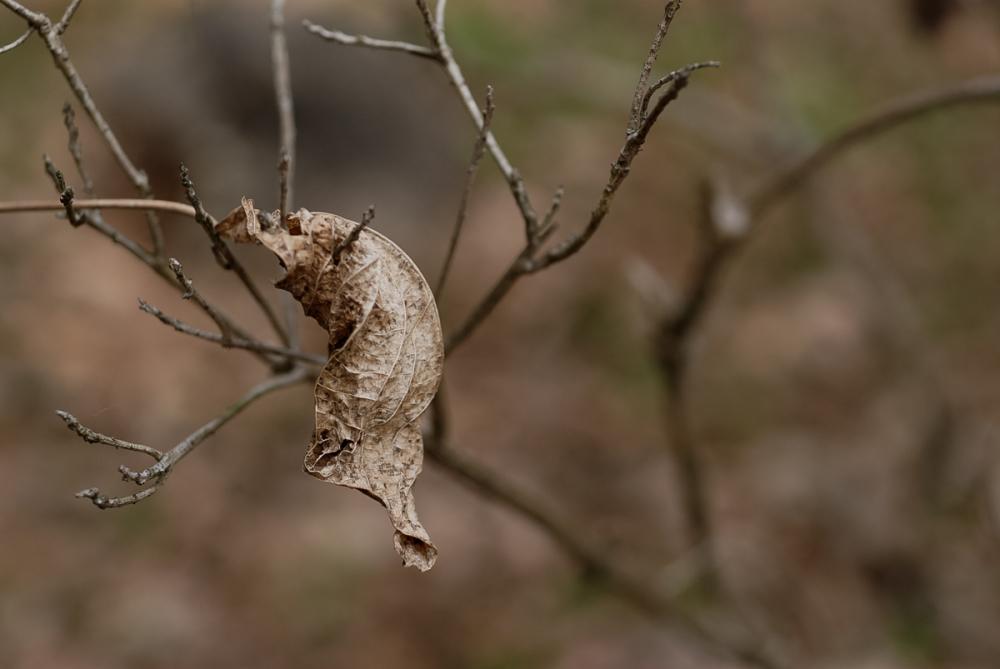 Winter Leaves - 4 -