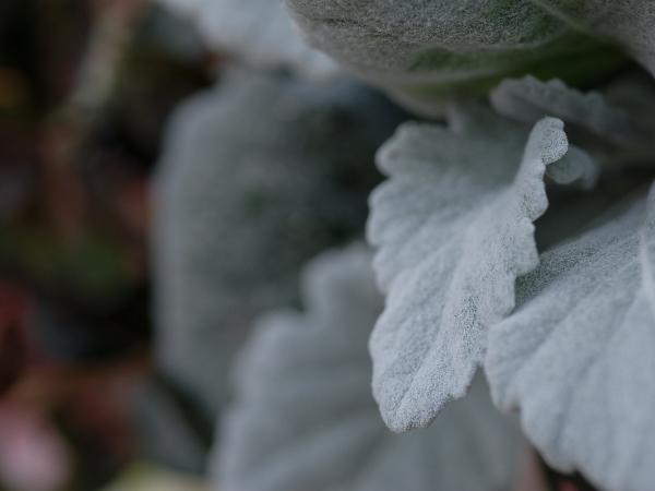 Winter Leaves - 3 -