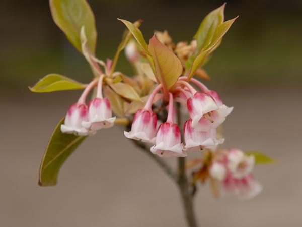 A Pink Chandelier