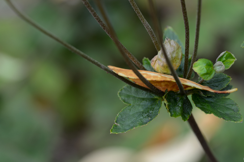 A Leaf Catcher