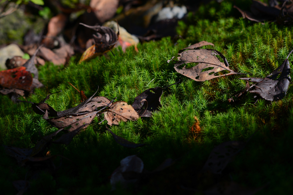 Leaves on The Moss
