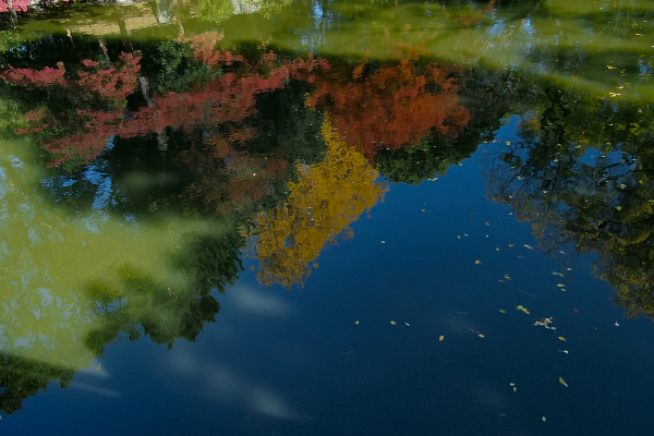 Colored Leaves  - 1 -