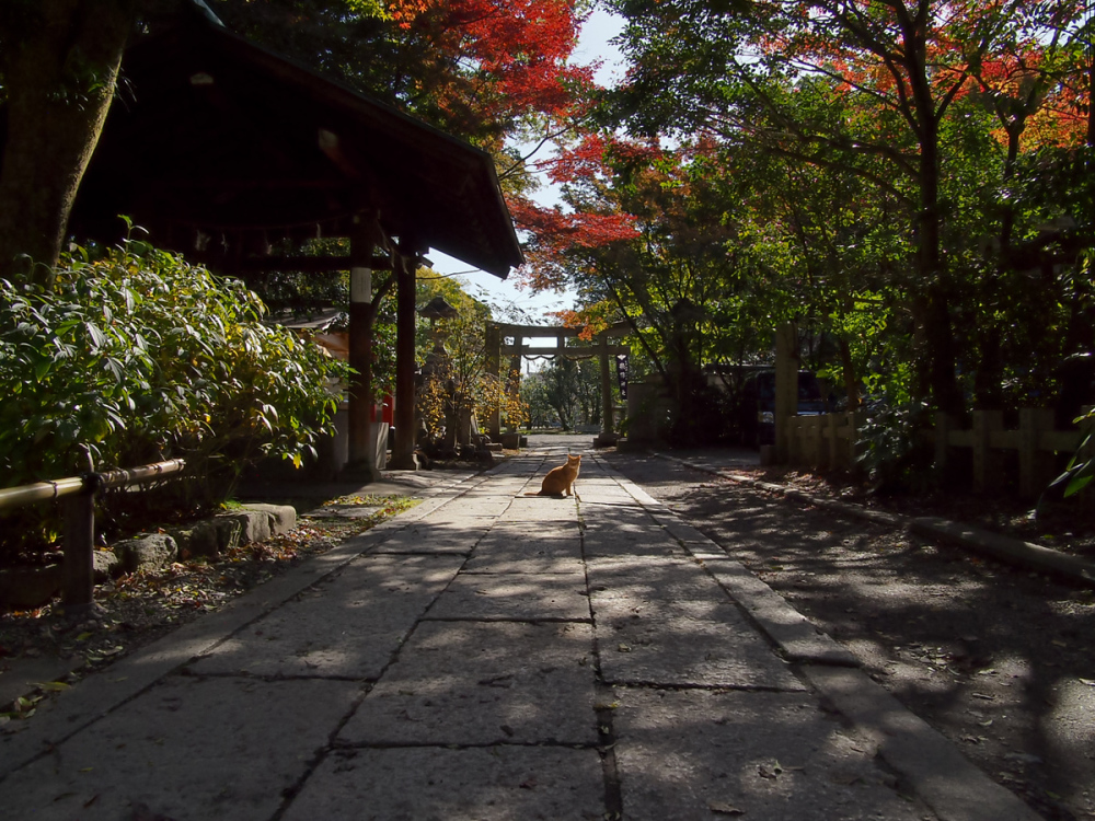 Colored Leaves  - 2 -
