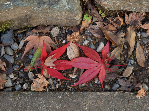 Colored Leaves  - 7 -