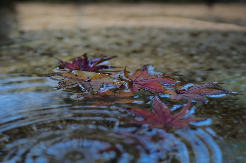 Colored Leaves  - 10 -
