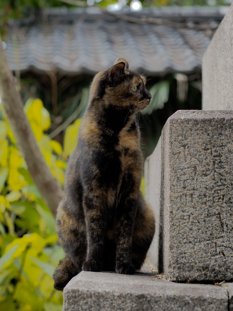 kyoto japan cat shrine