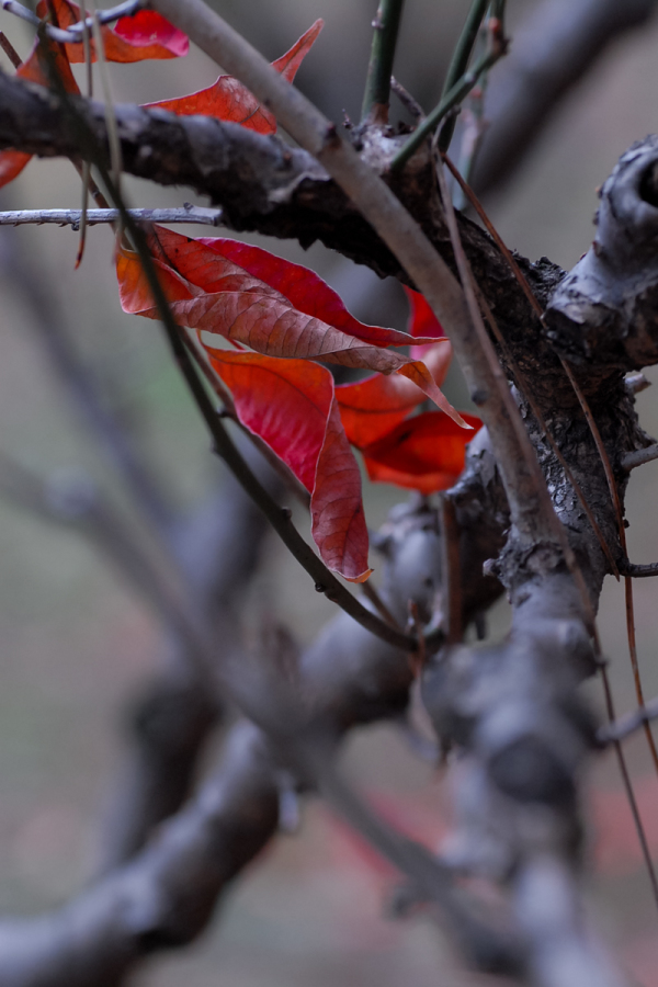 Colored Leaves  - 14 -