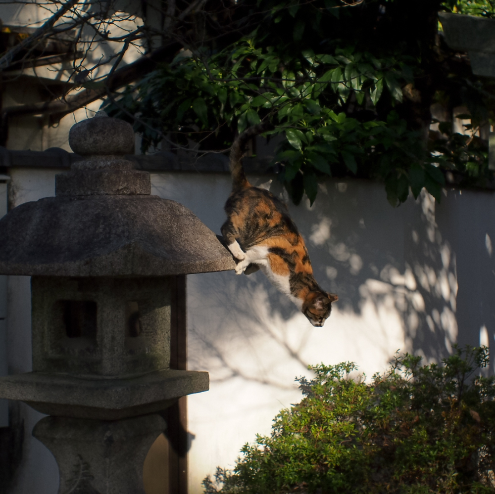 Kyoto Japan cat shrine jump