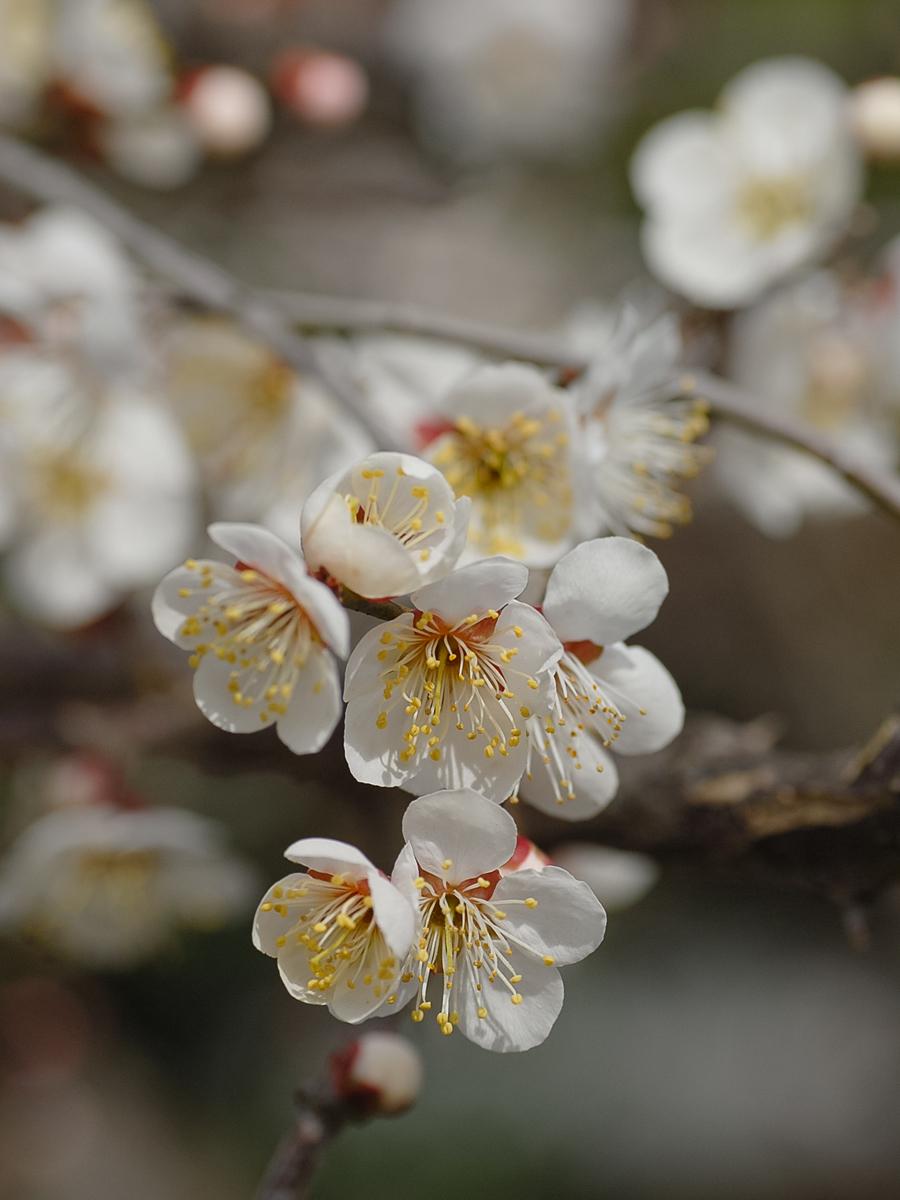 Spring Flowers 5 (2018)