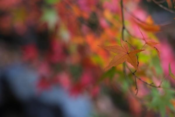 Autumn Leaves 2018