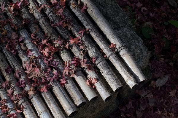 Autumn Leaves 2018  - 2 -