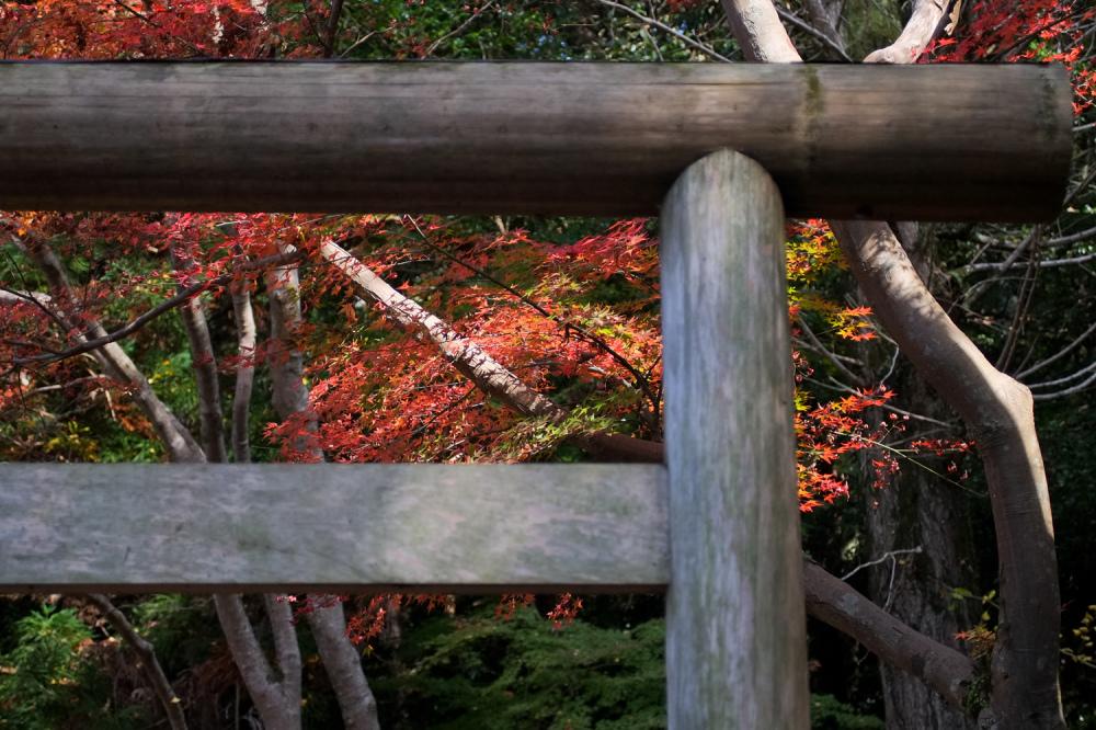 Autumn Leaves 2018  - 3 -