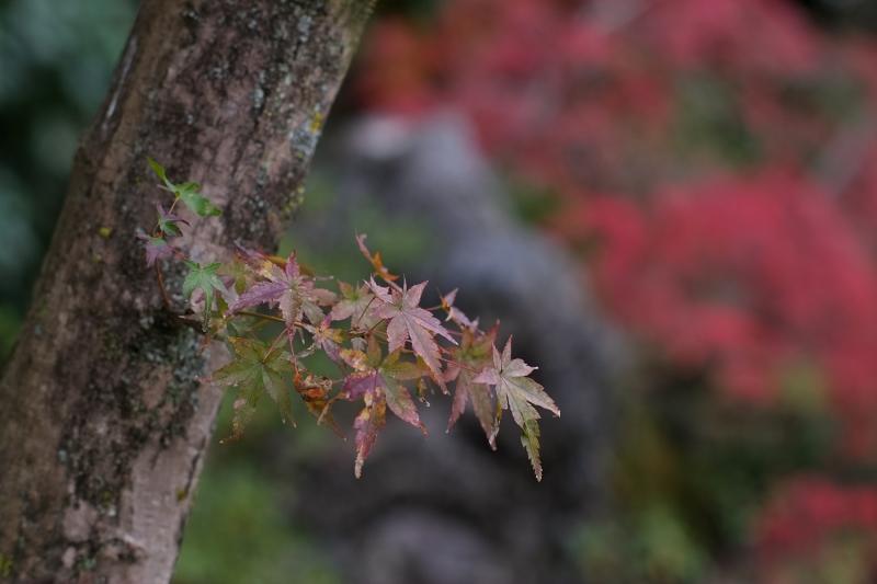 Autumn Leaves 2018  - 4 -