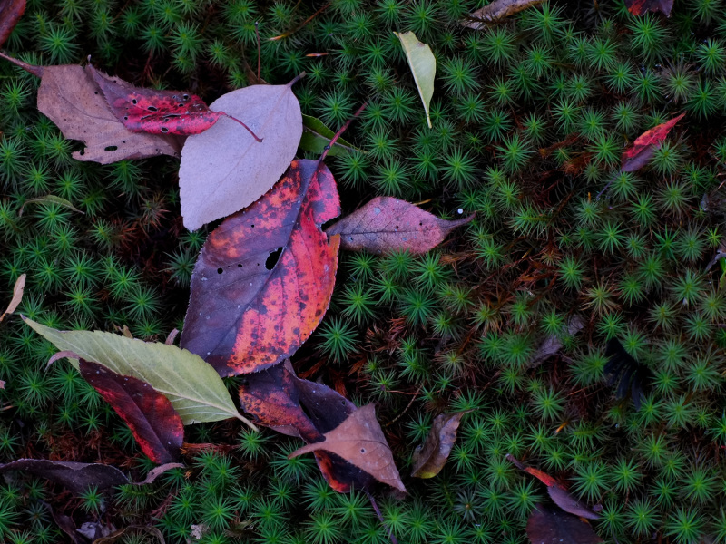 Autumn Leaves 2018  - 5 -
