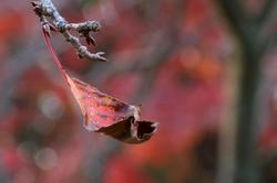 Winter Leaves 2018  - 1 -