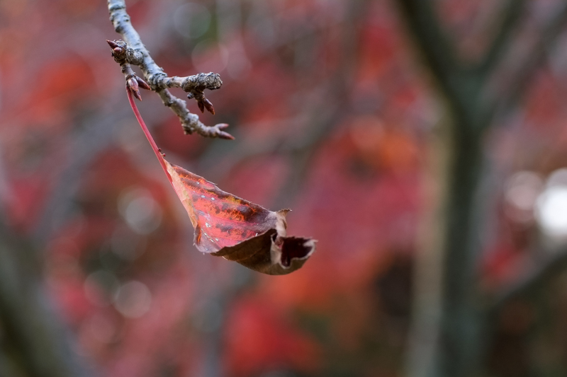 Winter Leaves 2018  - 1 -