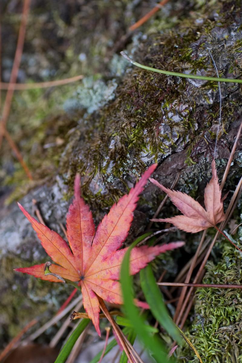 Winter Leaves 2018  - 2 -