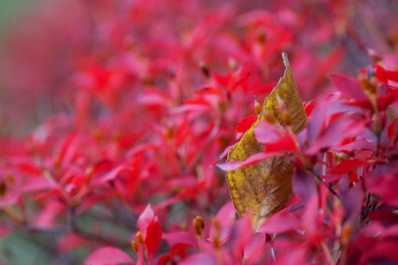 Winter Leaves 2018  - 3 -