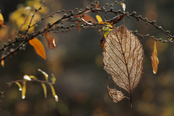 Winter Leaves 2018  - 8 -