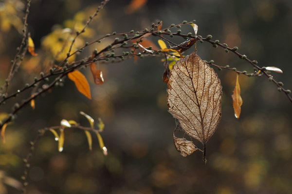 Winter Leaves 2018  - 8 -