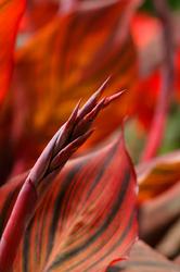 Flowers of the Rainy Season - 3 -
