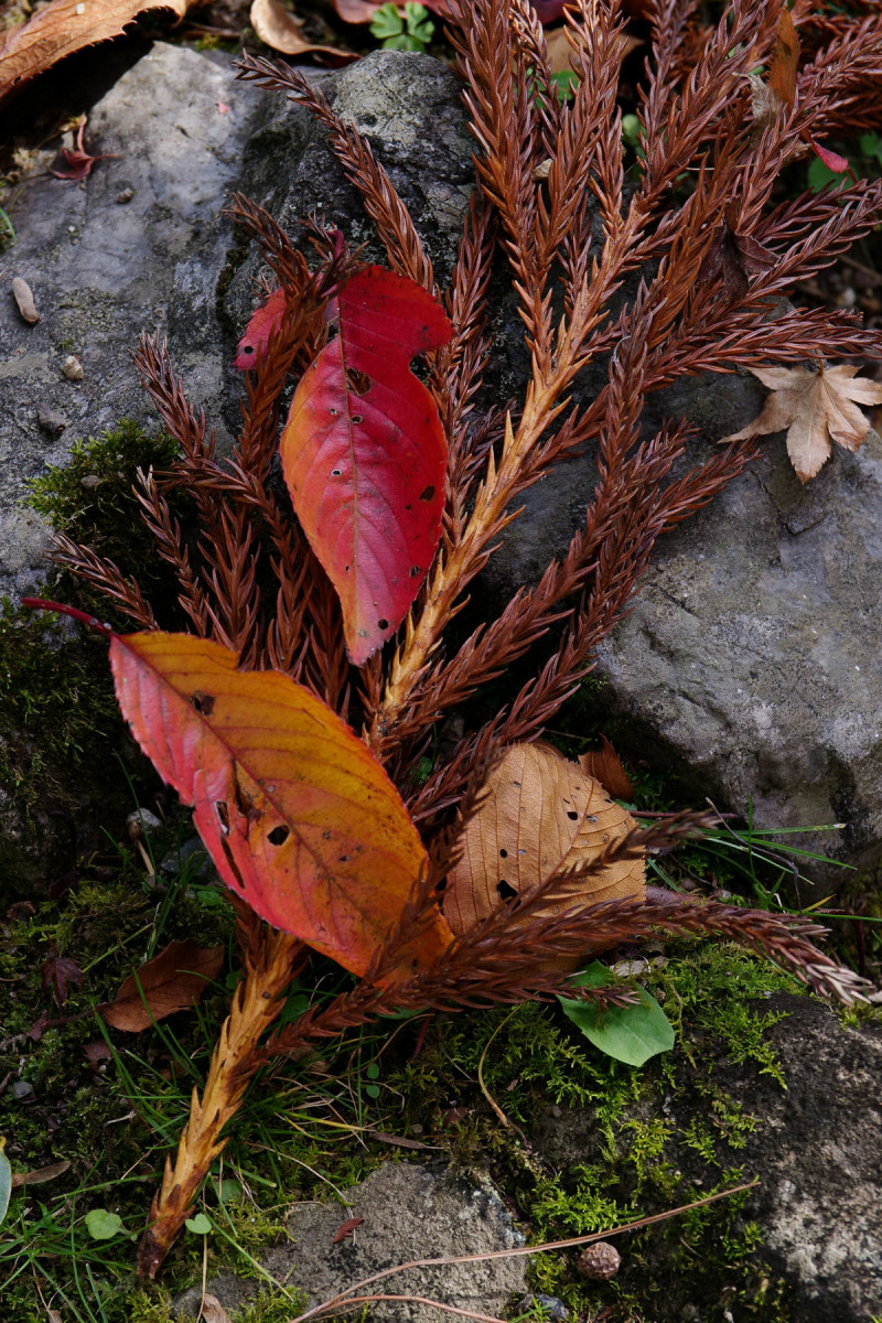 Autumn Leaves  - 3 - 2019