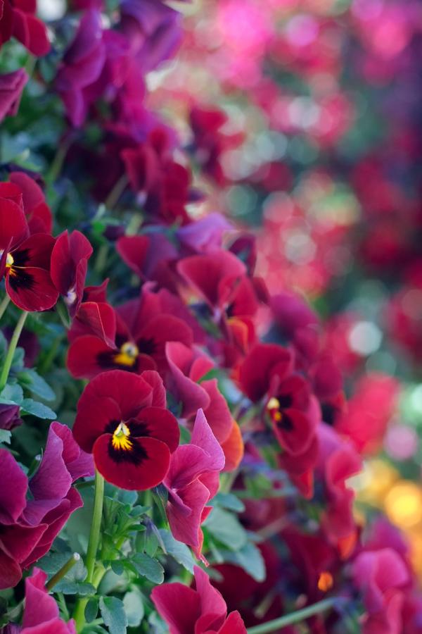 Spring Flowers - 1 - (2020 Mar.)