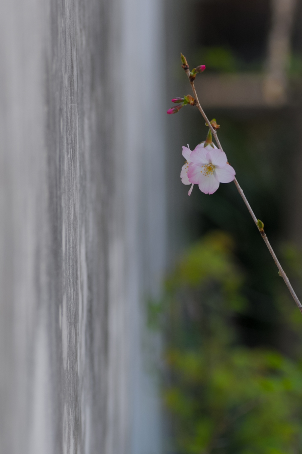 Spring Flowers - 4 - (2020 Apr.)