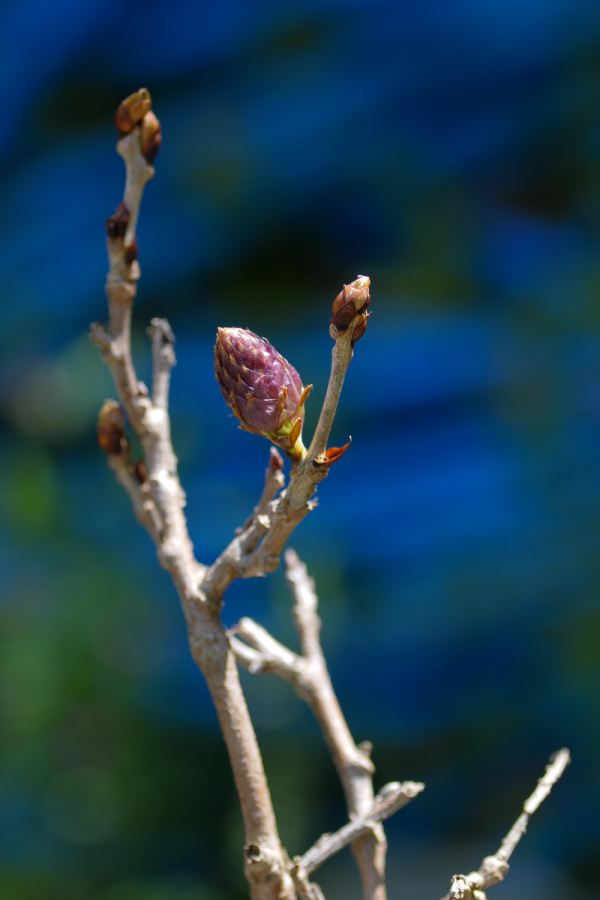 Spring Flowers - 5 - (2020 Apr.)