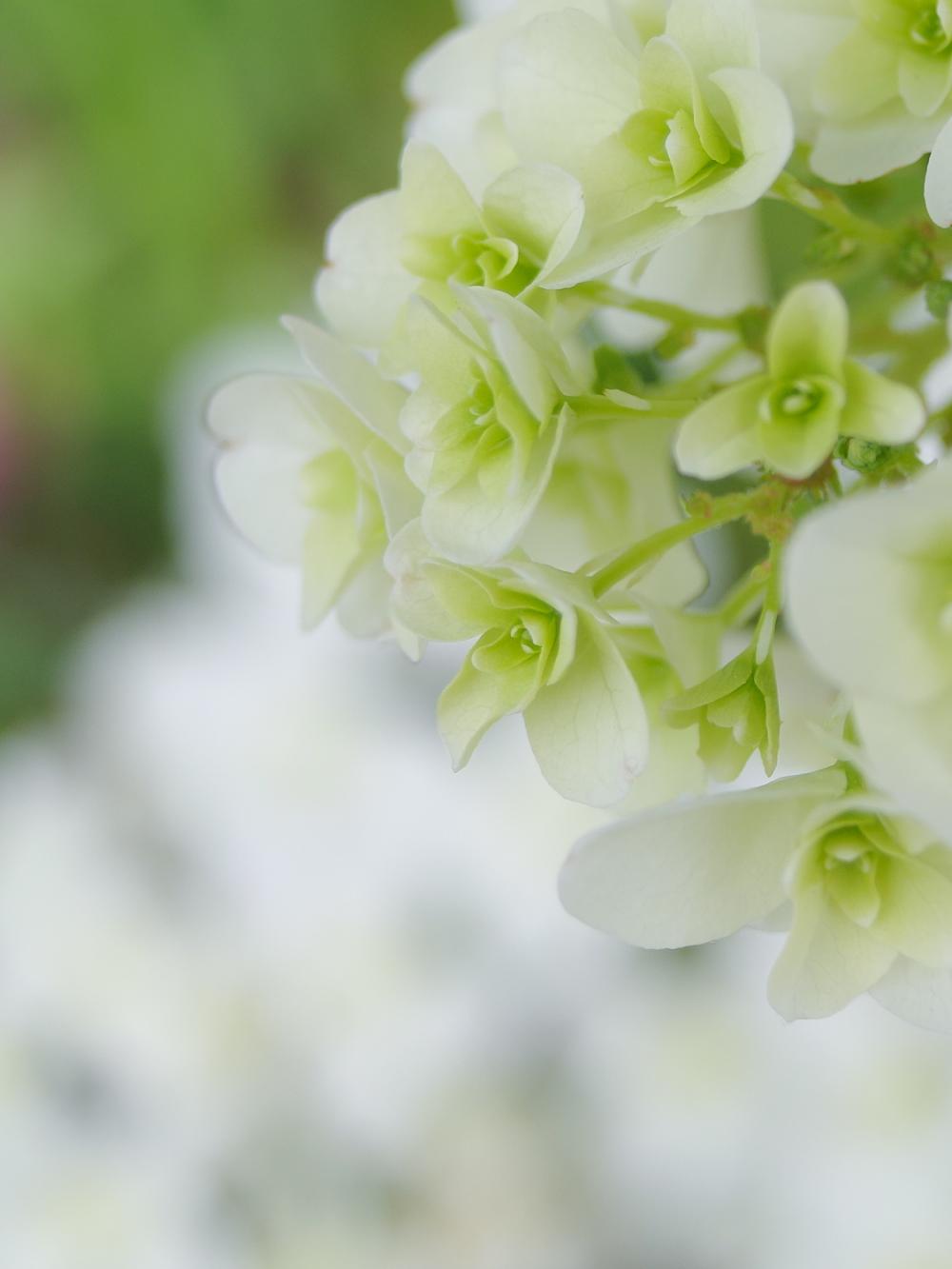 Rainy Season Flowers - 1 -
