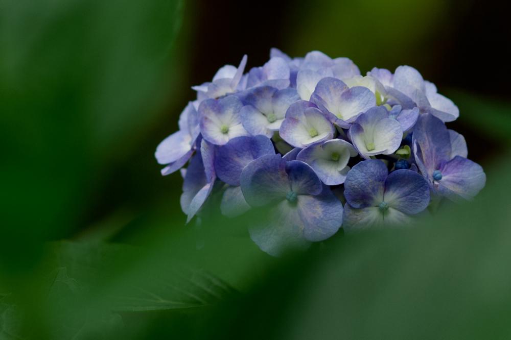 Rainy Season Flowers - 2 -