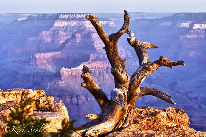 Dead Wood - Grand Canyon