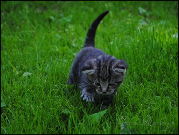 baby cat in grass